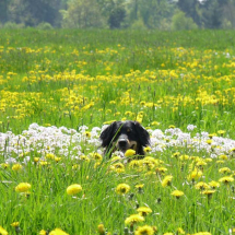 Frühling Finca